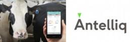 MSD ha adquirido Antelliq Corporation para convertirse en líder tecnológico digital para ganado y animales de compañía