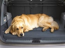 Más de un 85% de los españoles prefiere el coche para viajar con su mascota