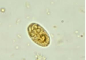 gato parásito intestinal giardia