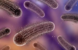 AXON COMUNICACION, Productos lácteos y su efecto funcional en la microbiota intestinal del hombre