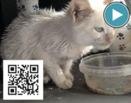 AXON COMUNICACION, Estenosis nasofaríngea felina