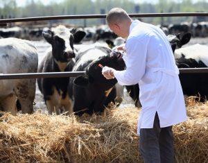 AXON COMUNICACION, Los veterinarios piden que se les reconozca como profesión de riesgo