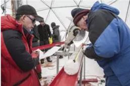 AXON COMUNICACION, Virus de 15.000 años sobreviven congelados en un glaciar tibetano