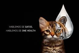 AXON COMUNICACION, HABLEMOS DE ONE HEALTH