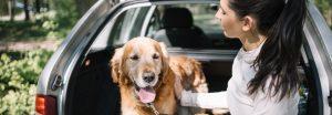 AXON COMUNICACION, normas de cómo viajar con su animal