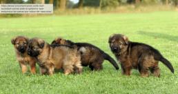 AXON COMUNICACION, La Real Sociedad Canina pide al Gobierno que endurezca las penas por robos de mascotas