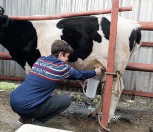 AXON COMUNICACION, Utilización de co-productos proteicos en raciones de vacas lecheras