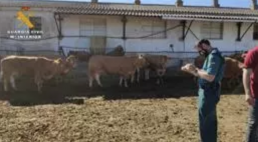 AXON COMUNICCION, Investigado un ganadero riojano por presuntamente robar ganado, cambiarle el crotal y hacerlas pasar por suyo