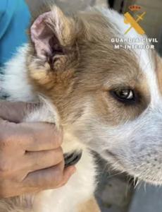 AXON COMUNICACION, Mutila las orejas y rabos a tres cachorros de perro