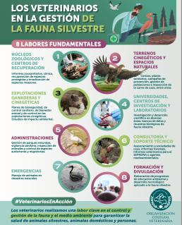 AXON COMUNICACION, AXON COMUNICACION, Los veterinarios españoles atienden a 960 especies silvestres