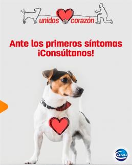 AXON COMUNICACION, Celebra el Mes del Corazón con Ceva Salud Animal