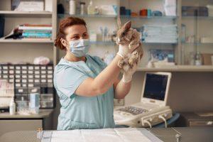 AXON COMUNICACION, Glaucoma en conejos domésticos