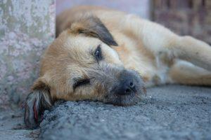 CRIA Y SALUD, 50 toneladas de alimentos para perros y gatos a familias en riesgo de exclusión social