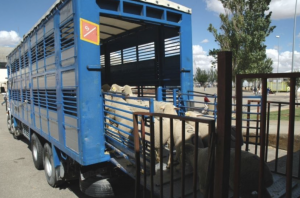 AXON COMUNICACION, 200 veterinarios en el seminario sobre transporte de animales de granja