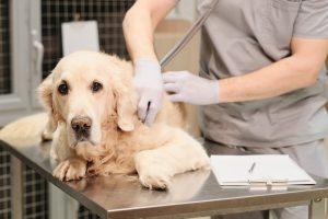 AXON COMUNICACION, Prevalencia de las principales enfermedades vectoriales en perros de las 50 provincias Españolas