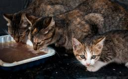 axon comunicacion, El Colegio de Veterinarios de Sevilla visita Gines para informar sobre el control de colonias felinas