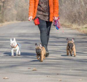 AXON COMUNICACION, Se insta al Gobierno a que asociaciones animales y criadores impartan la formación para tener mascotas